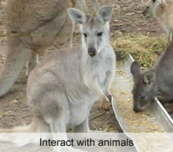 Interact with animals at the Fraser Coast Wildlife Sanctuary