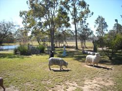Sheep statues